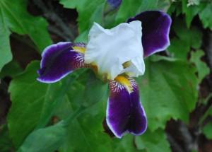 flower by Sarah