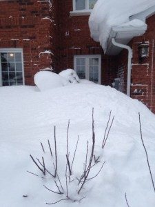 snowdrift 4